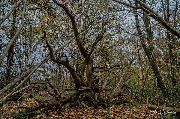 Butchers Wood-6241-Edit-2