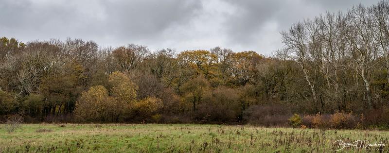 Butchers Wood-6258-Pano