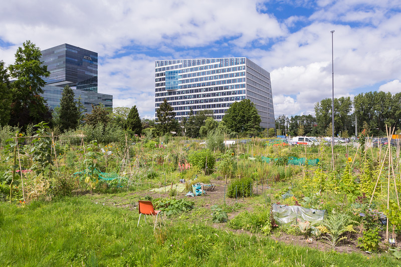 The Edge office building with an allotment garden in the foreground
