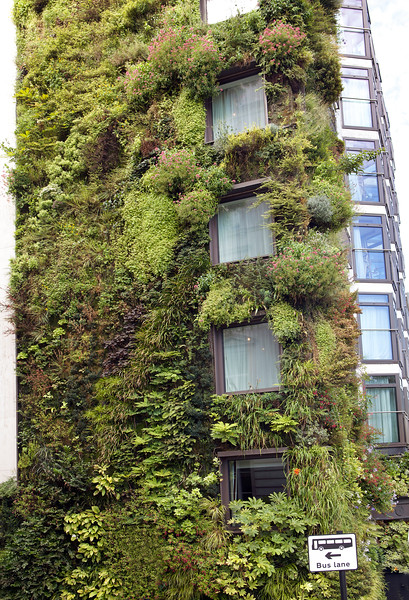 The green wall of The Athenaeum on Piccadilly, London on the 18th August 2012