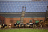 dairy farm with photovoltaic panels near Goch Germany 080112 ©RLLord 246 smg