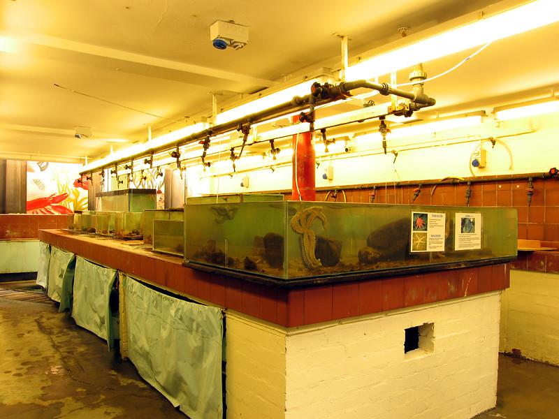 Dove Marine Laboratory aquaria 180307 7199 smg