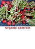 Organic beetroot sign smg