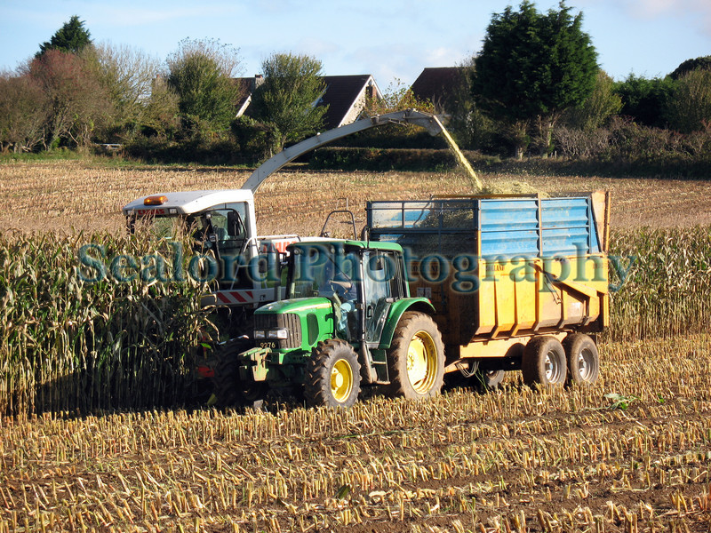 A farmer harvests a field of maize (or corn) on the outskirts of St. Peter Port on 31st October 2007 in Guernsey, Channel Islands, Great Britain.<br /> File No. 311007 1459 <br /> ©RLLord<br /> fishinfo@guernsey.net