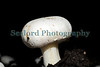 Guernsey Mushroom Growers spider mite 061209 183