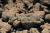 Guernsey Mushroom Growers spider mite 061209 182