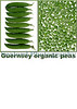 Guernsey organic peas sign two panel 100x75mm smg