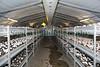 Guernsey Mushroom Growers 061209