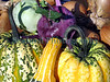 Organically grown vegetables (a mixture of squash/kohl rabi and onions) on display at the Sausmarez Manor Farmers' market in Guernsey, Channel Islands on the 20th October 2007.<br /> File No. 201007 1448<br /> ©RLLord<br /> fishinfo@guernsey.net