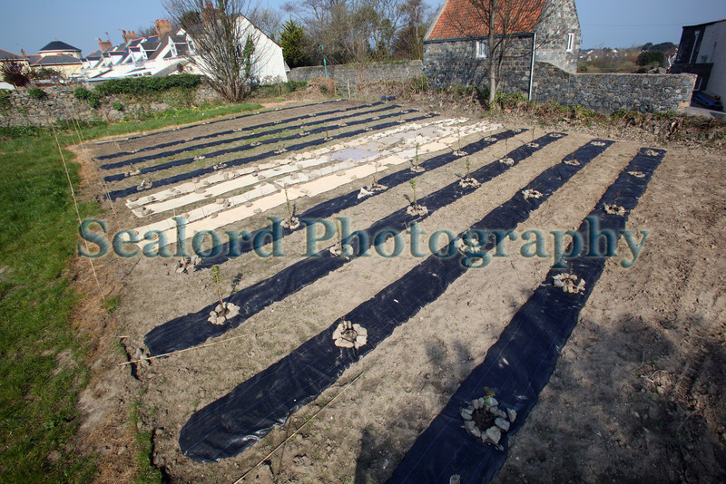 Fruit trees Brock Road 010409 ©RLLord 2757 smg