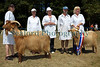 Guernsey Golden Goats Royal Agriculture Show 290710 ©RLLord 9886 smg