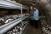 Guernsey Mushroom Growers 061209 196