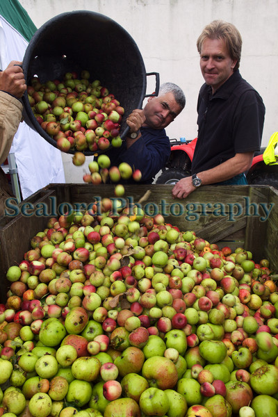 "James Meller of Rocquette Cider accepts apples during Big Apple Day held at Blanchelande College in the parish of St Andrew, Guernsey on 3 October 2010.<br /> <br /> File No. 031010 306<br /> <br /> All Rights Reserved©RLLord<br /> <br /> <a href=""http://www.sustainableguernsey.info/blog/2010/10/st-andrews-and-guernseys-big-apple-bonanza/"">http://www.sustainableguernsey.info/blog/2010/10/st-andrews-and-guernseys-big-apple-bonanza/</a><br /> <br /> sustainableguernsey@gmail.com"