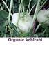 Organic kohlrabi sign smg