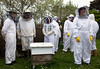 Guernsey Beekeepers' Assocation 220409 ©RLLord 3268 smg
