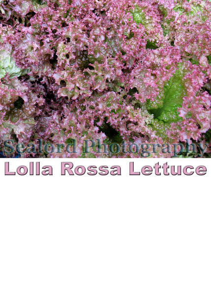 lettuce sign smg