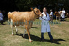 Guernsey Royal Agriculture Show girl leading cow 290710 ©RLLord 9822 smg