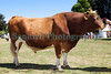 Guernsey bull Royal Agriculture Show 290710 ©RLLord 9895 smg