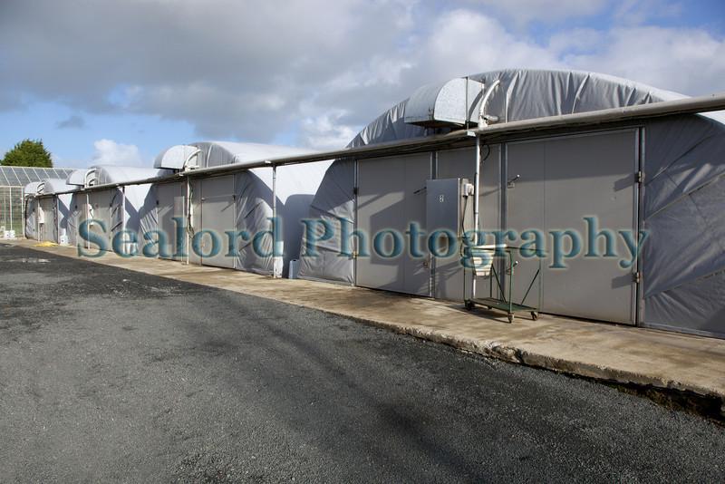 Guernsey Mushroom Growers polytunnel 061209 169