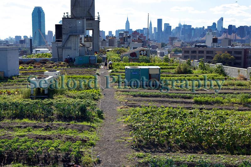 Brooklyn Grange Farm New York 290812 ©RLLord 2946 smg