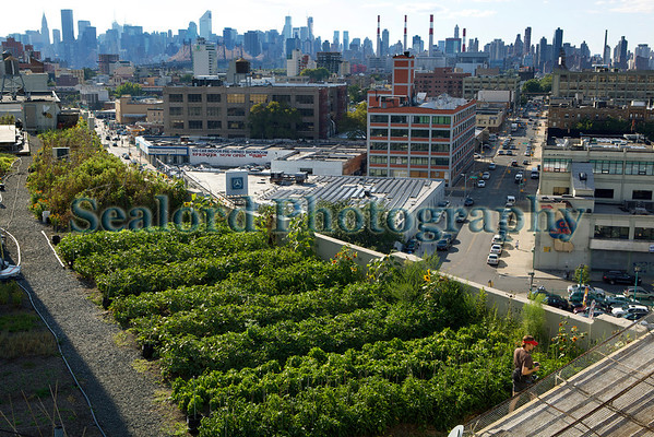 Brooklyn Grange Farm New York 290812 ©RLLord 3001 smg