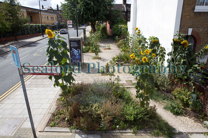The Edible Bus Stop Lambeth 220812 ©RLLord 2048 smg