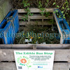 The Edible Bus Stop compost pile 220812 ©RLLord 2034 smg