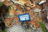 Calappa crab Avola Sicily 020410 ©RLLord 1404 smg