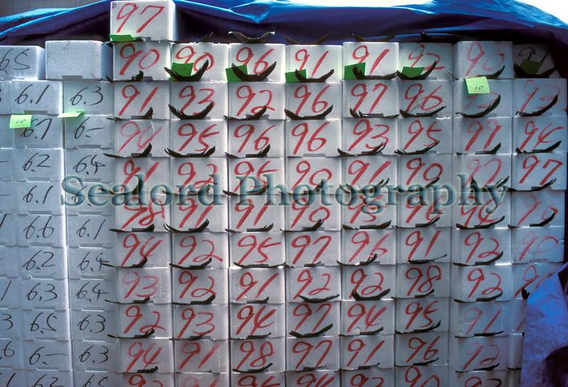 Tsukiji boxes of yellowtail 1290 2 smg