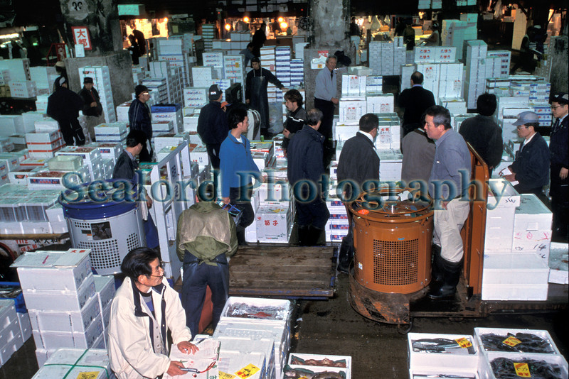 Tsukiji fresh fish auction boxes 23-542 smg