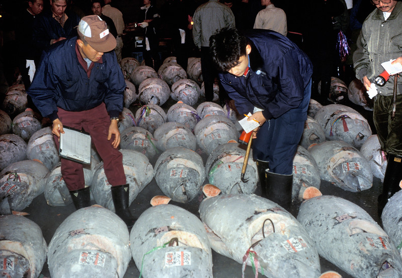 Buyers inspecting the quality of frozen tuna prior to the auction at the Tsukiji Fish Market in December 1990