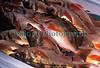 Tsukiji Sebastes thompsoni 6-541 smg