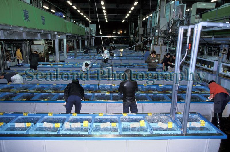 Tsukiji live fish auction area 33-542 smg