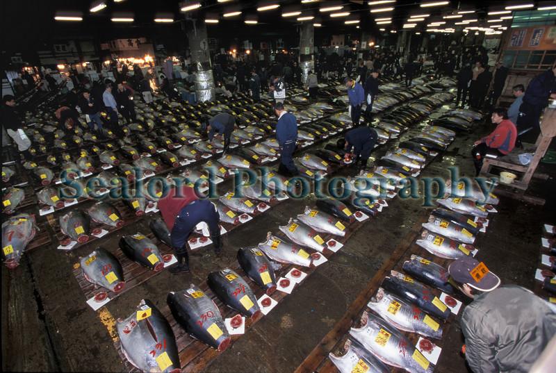 Tsukiji fresh tuna auction 15-540 smg