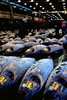 Frozen tuna lie on the ground while being auctioned at the Tsukiji Fish Market in Tokyo, Japan