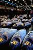 Tsukiji frozen tuna auction 171290 25 smg