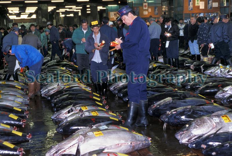 Tsukiji Fish Market, Tokyo, Japan - sealord