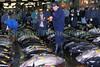 Tsukiji fresh tuna auction buyers 5-543 smg