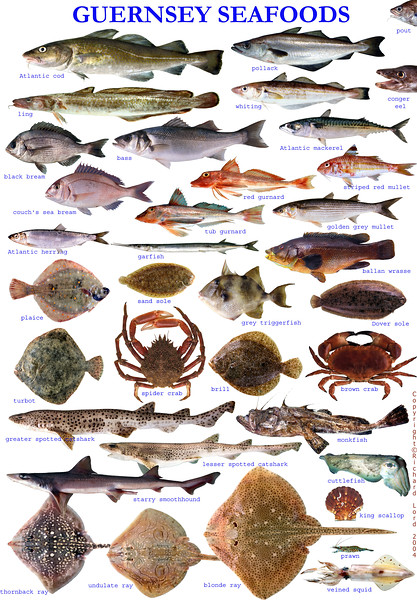 Guernsey Seafoods poster formatted for A3 size but fish and seafood posters can be made to order depending on species list and size of poster required.