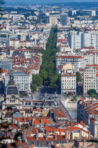 Tree lined Cours Gambetta in Lyon, France