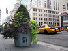 NYC 34th street partnership flowers 310807 602 smg