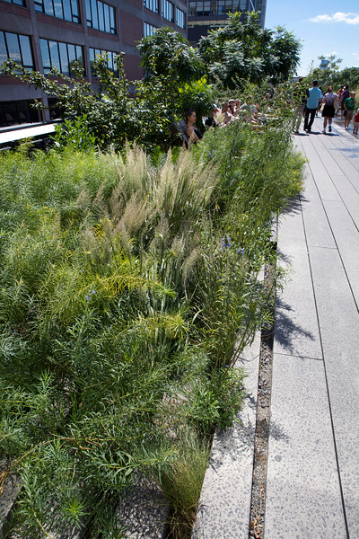 Highline walkway New York City 290812 ©RLLord 2893 smg