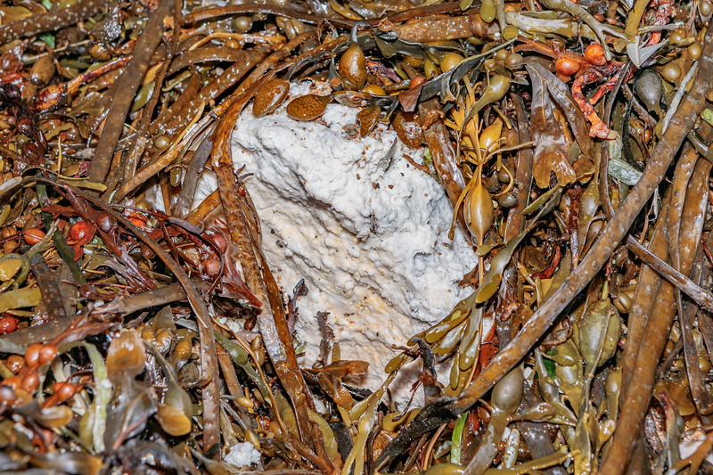 Lump of greasy, friable material in seaweed strand line at Petit Port on Guernsey's south coast on 4th November 2019