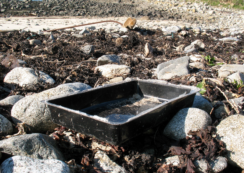 Plastic tray on the sea shore at Champ Rouget, Guernsey