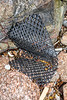 Hard plastic mesh bag washed up at Petit Port on Guernsey's south coast on 16th December 2019