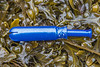 Plastic tampon applicator on the seaweed strand line at Petit Port on Guernsey's south coast on the 28th January 2021