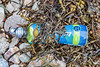 Lucozade Sport plastic bottle in the seaweed strand line at Petit Port on Guernsey's south coast on 8th July 2020