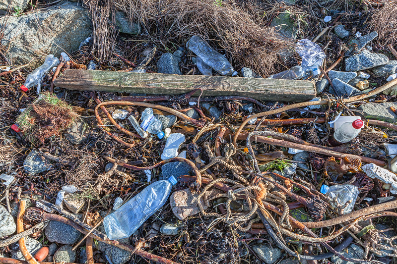 Seaweed strand line litter at Champ Rouget, Chouet on Guernsey's north coast on 4th February 2014