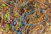 Twisted threads of blue plastic string washed up at Petit Port on Guernsey's south coast on 18th September 2020