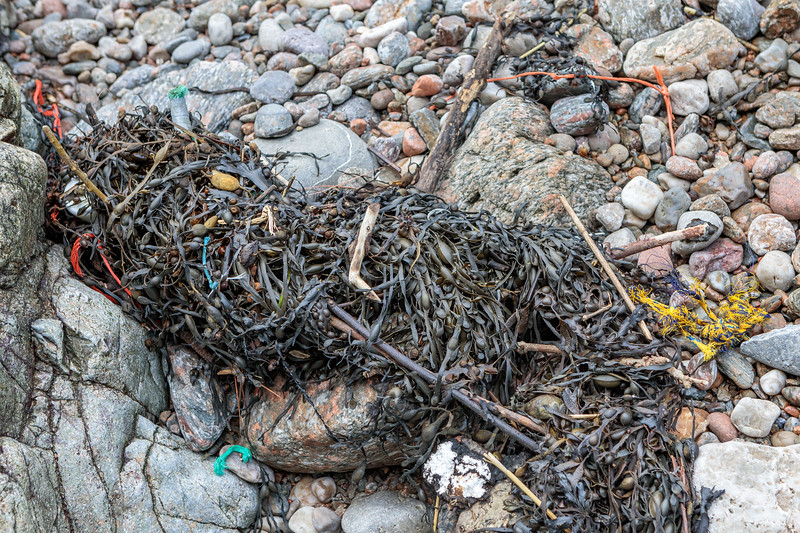 Rope and twine in seaweed strand line at Petit Port on Guernsey's south coast on 18th January 2019